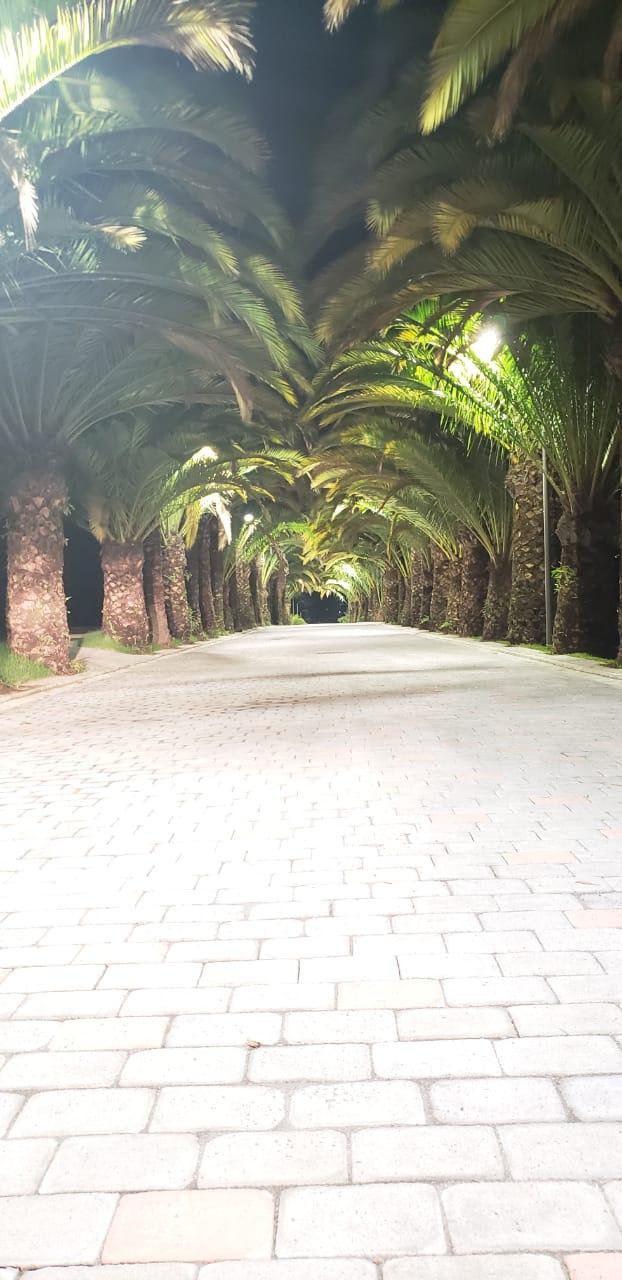 paseo canarias